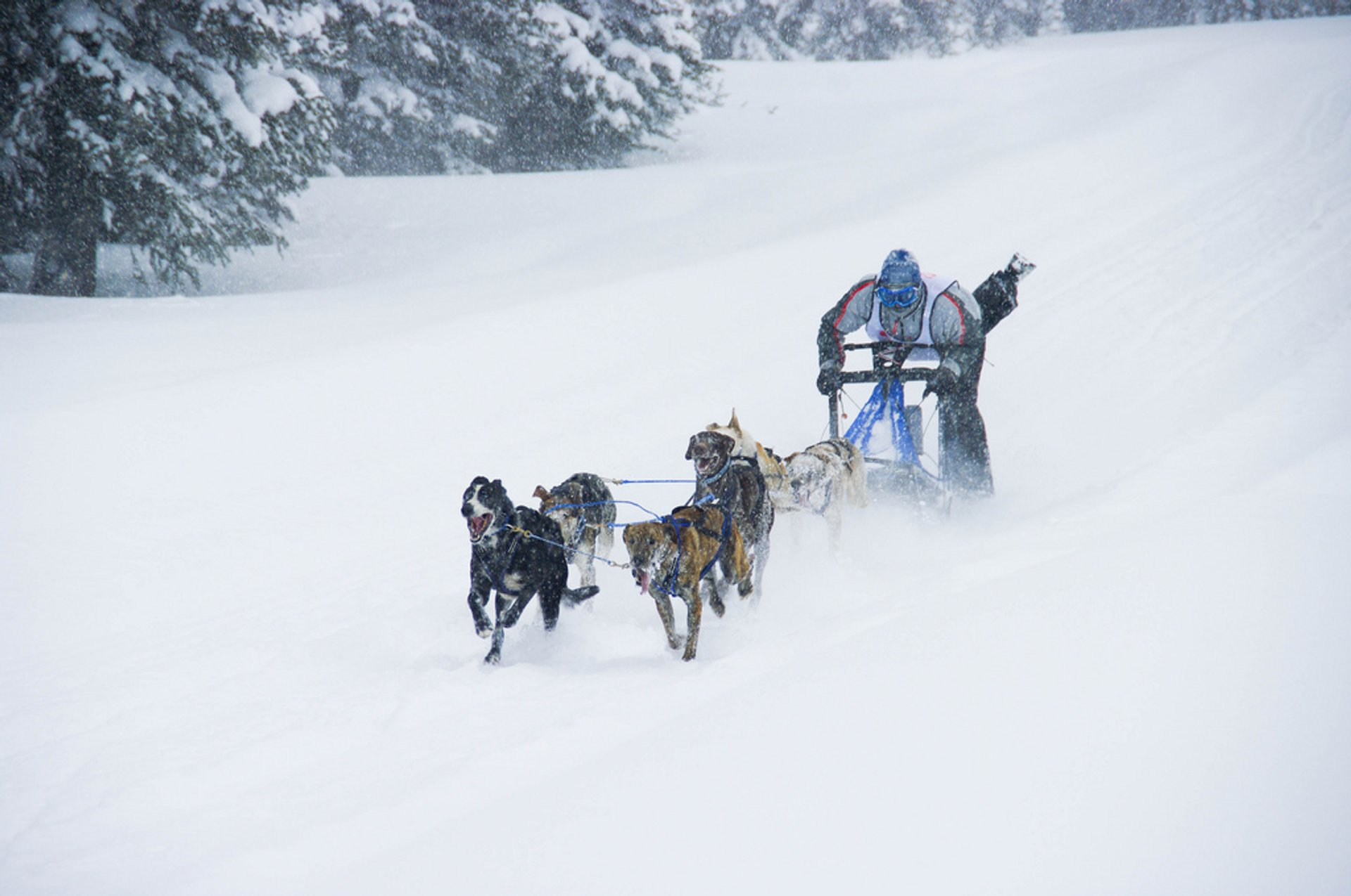 Dog Sledding & Snow Tubing in Colorado - Best Season 2020
