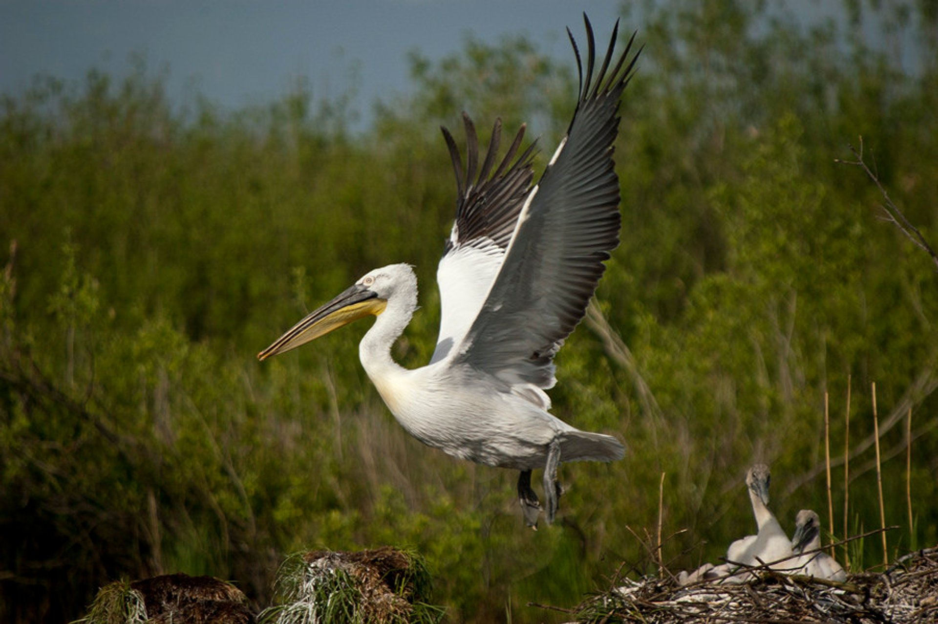 Birdwatching in Montenegro 2020 - Best Time