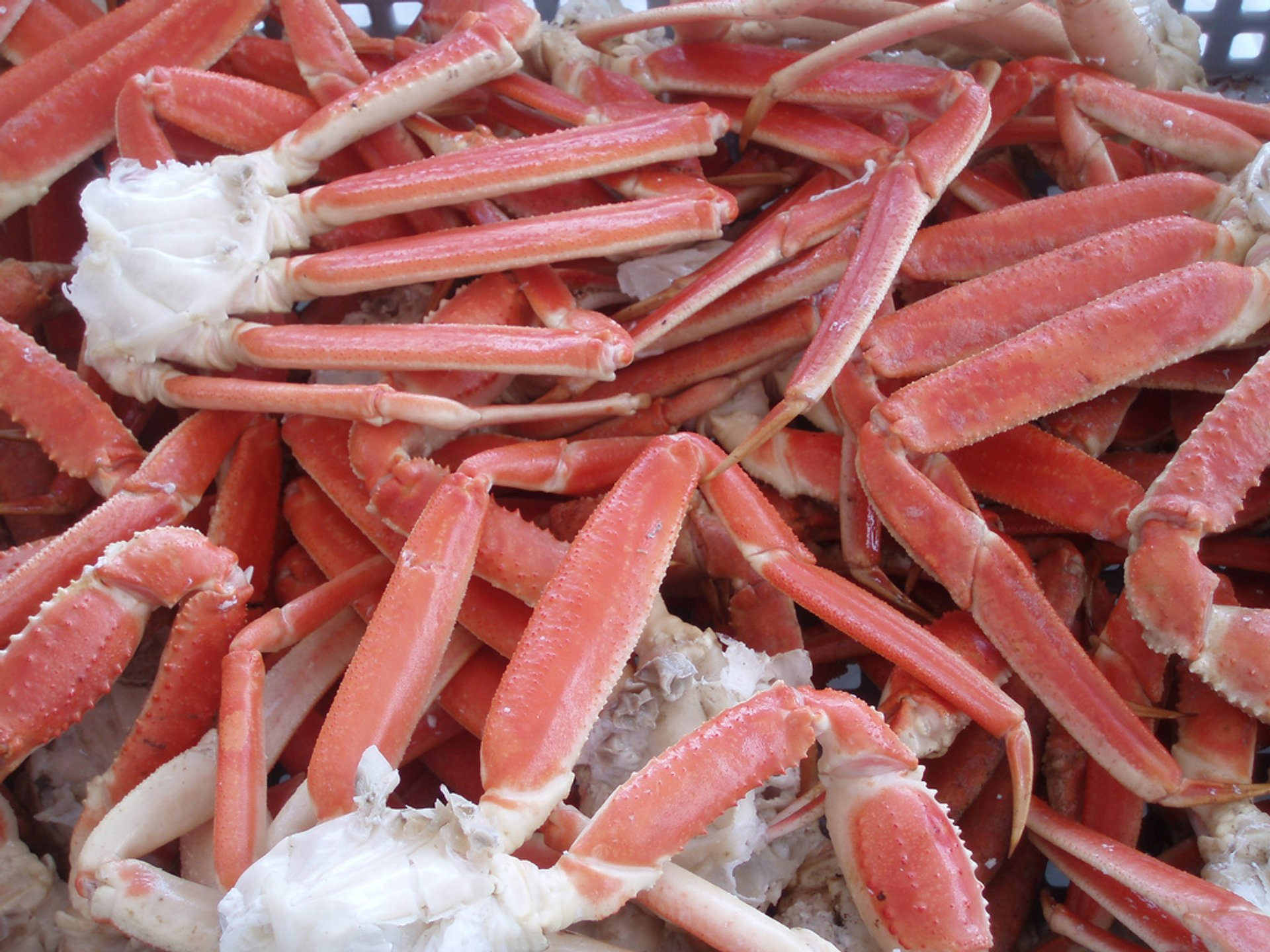Snow Crab in Quebec - Best Time