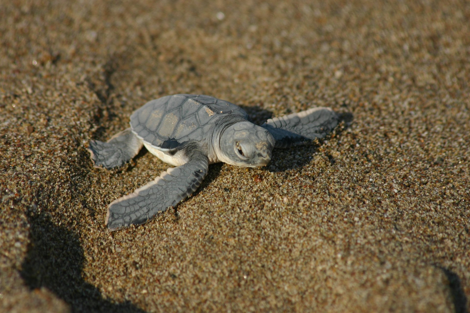 Baby Turtle Watching in Cyprus 2020 - Best Time