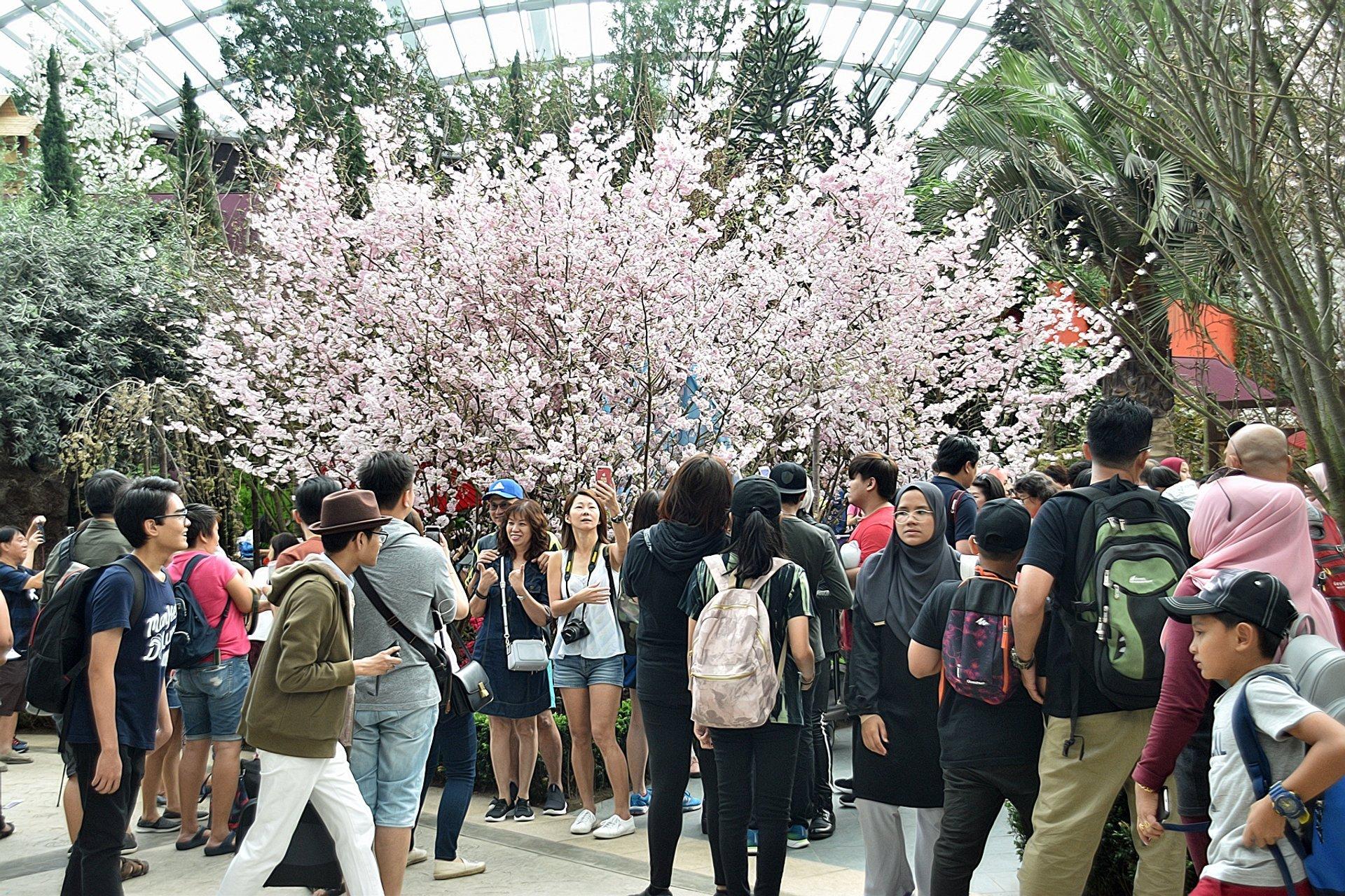 Sakura Matsuri floral display 2019