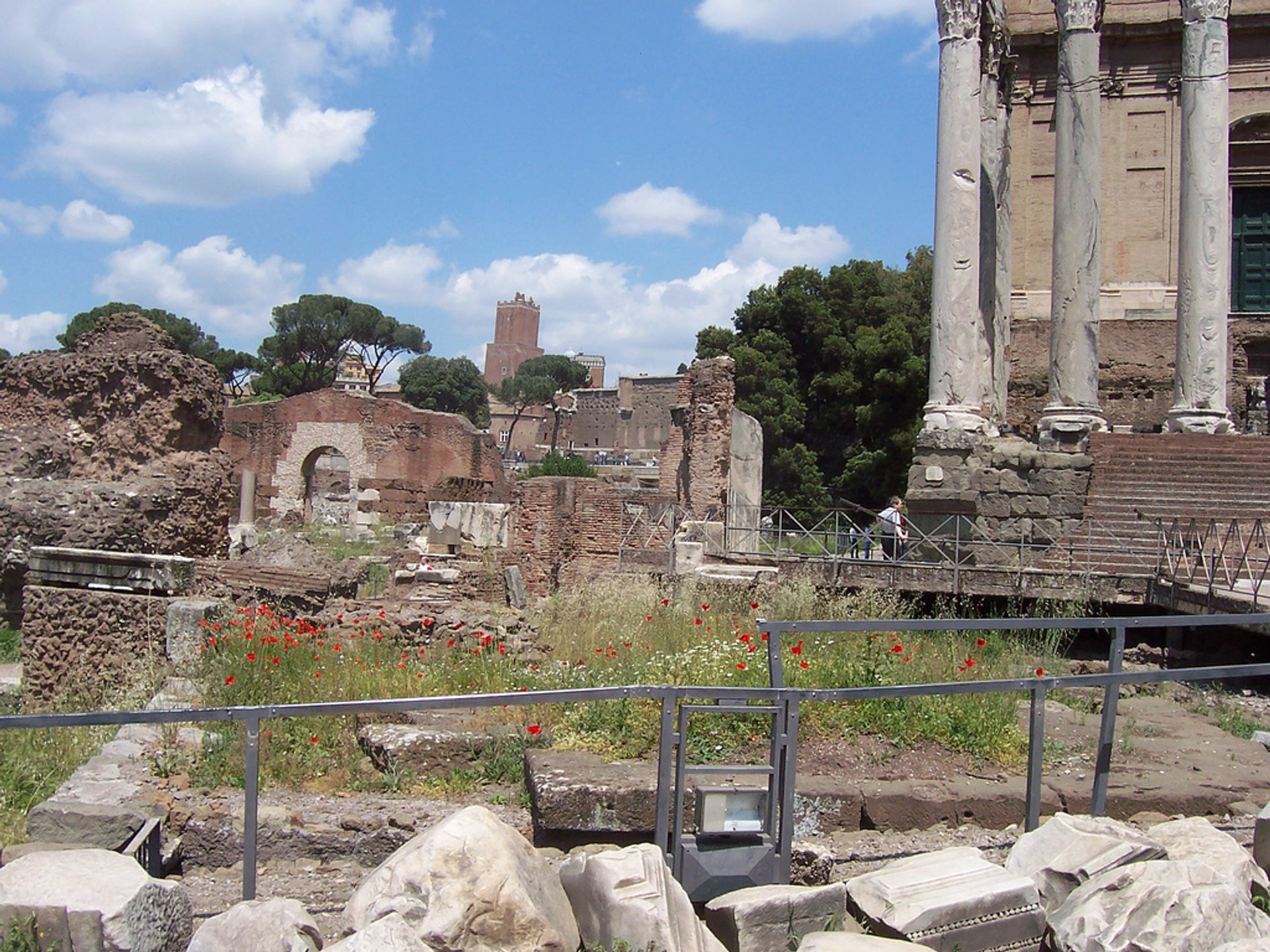 Poppies at the Roman Forum in Rome 2020 - Best Time