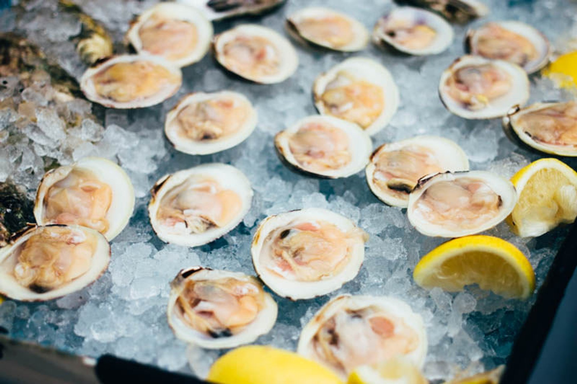 Oysters in Boston 2020 - Best Time
