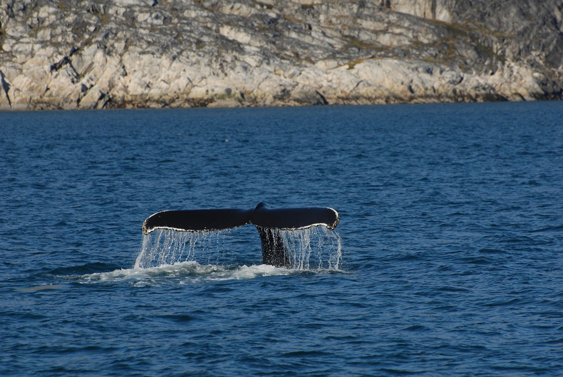 Best time to see Whale Watching in Greenland 2020