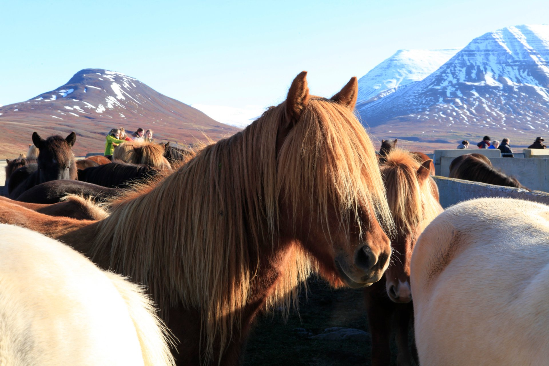 Laufskálarétt in Iceland 2019 - Best Time