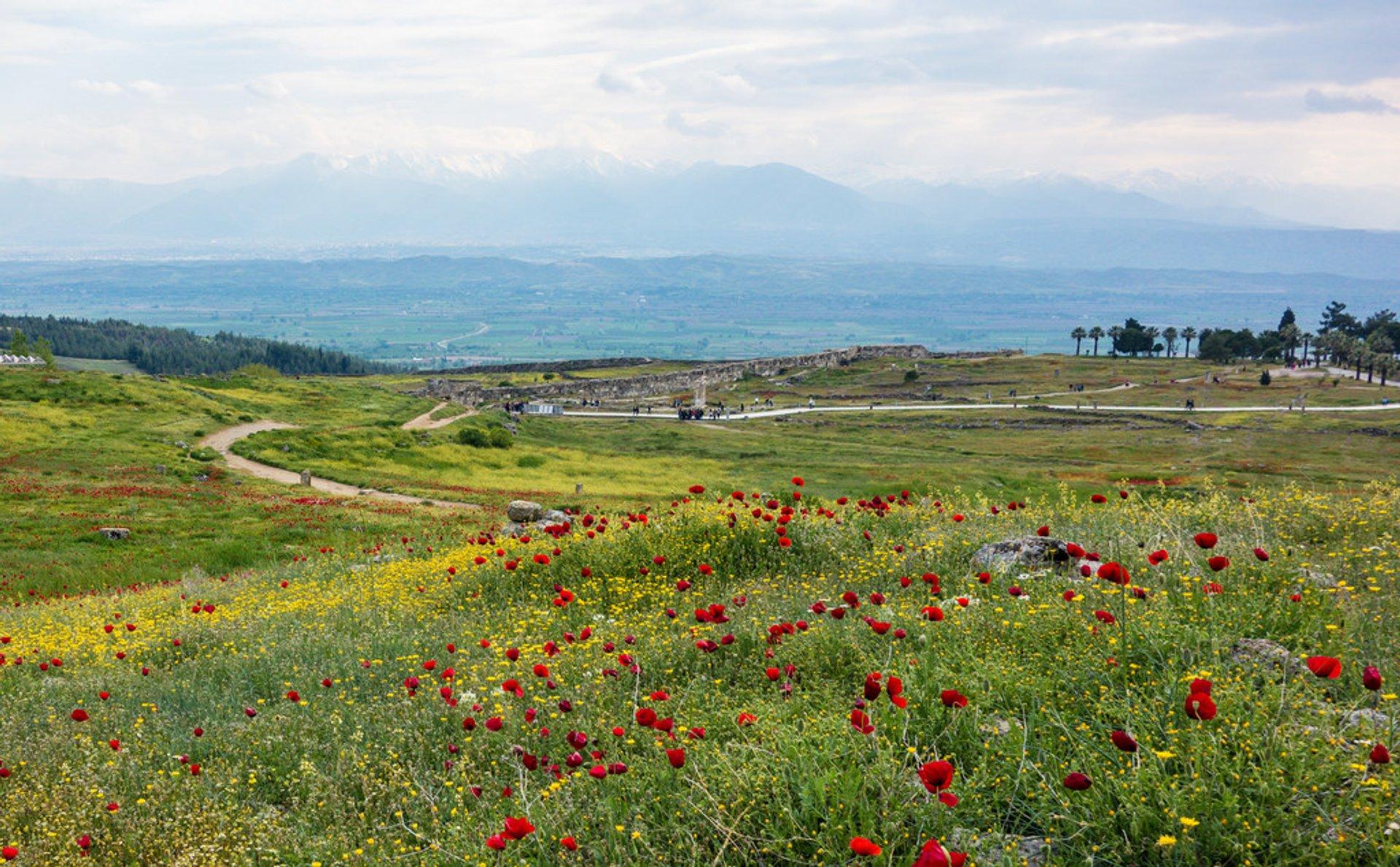 Wildflowers in Turkey 2020 - Best Time