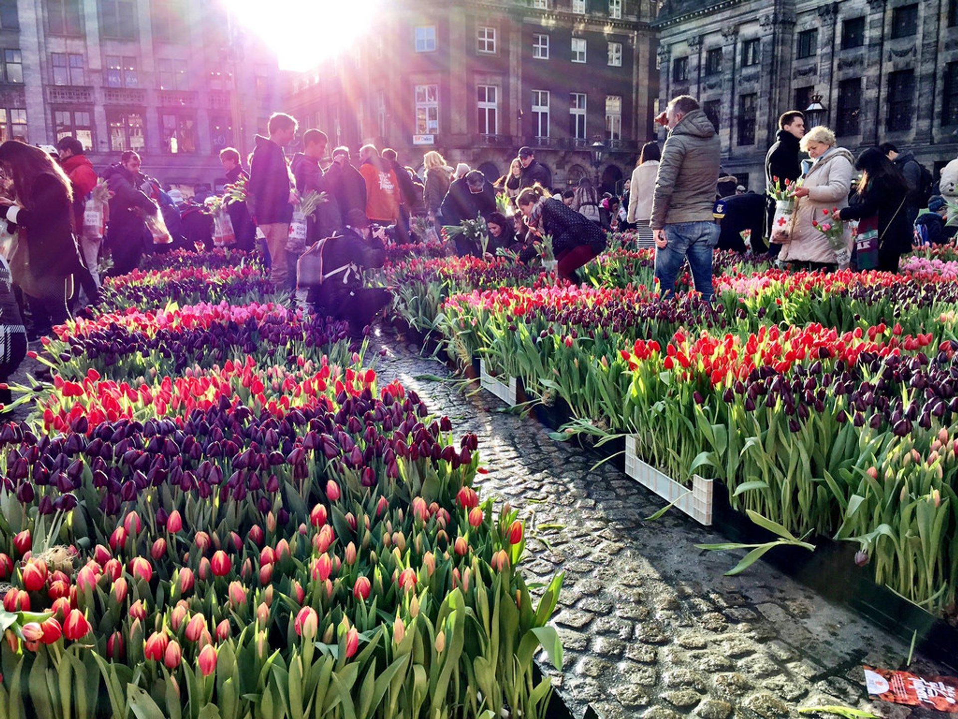National Tulip Day in The Netherlands - Best Season 2020