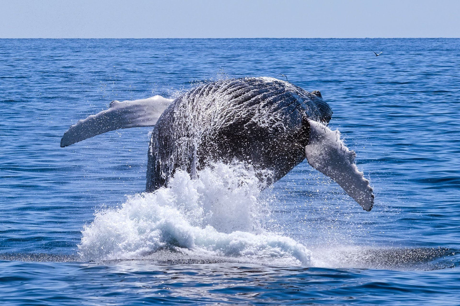 Best time for Whale Watching in Massachusetts 2019