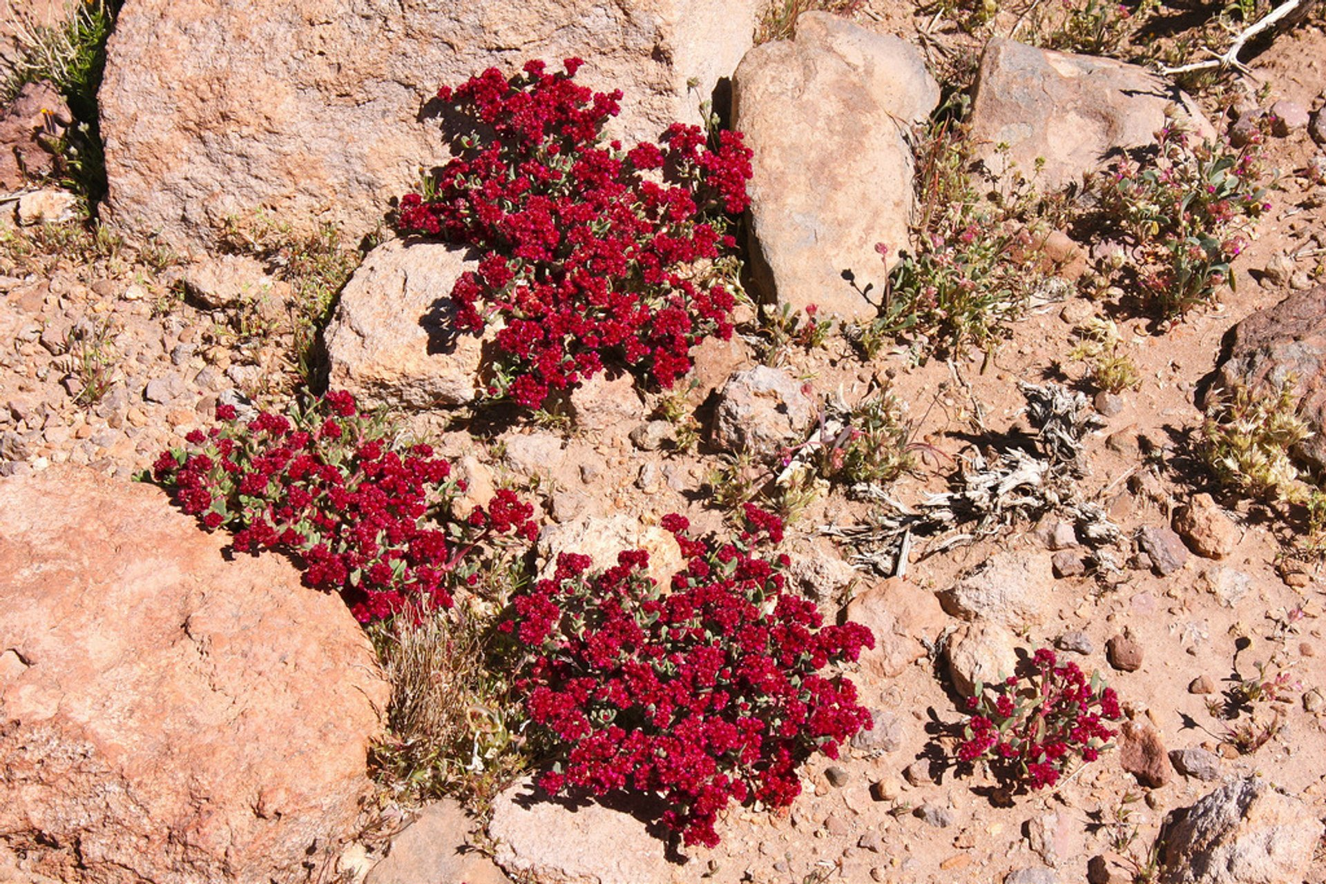 Wild Flowers in Bolivia 2020 - Best Time