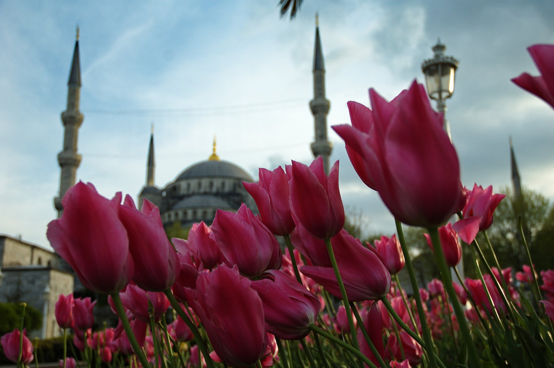 Tulips near Sultan Ahmet Mosque (Blue Mosque) 2019