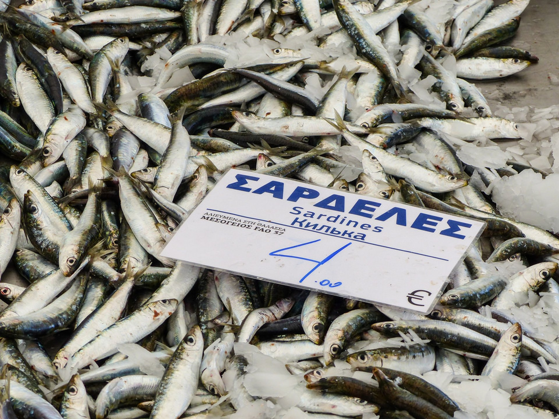 Best time for Sardine Season in Greece 2020