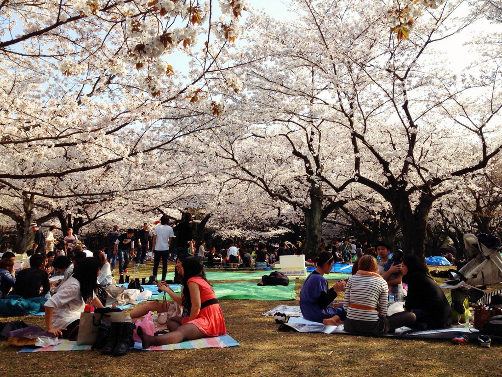 Yoyogi Park hanami 2020