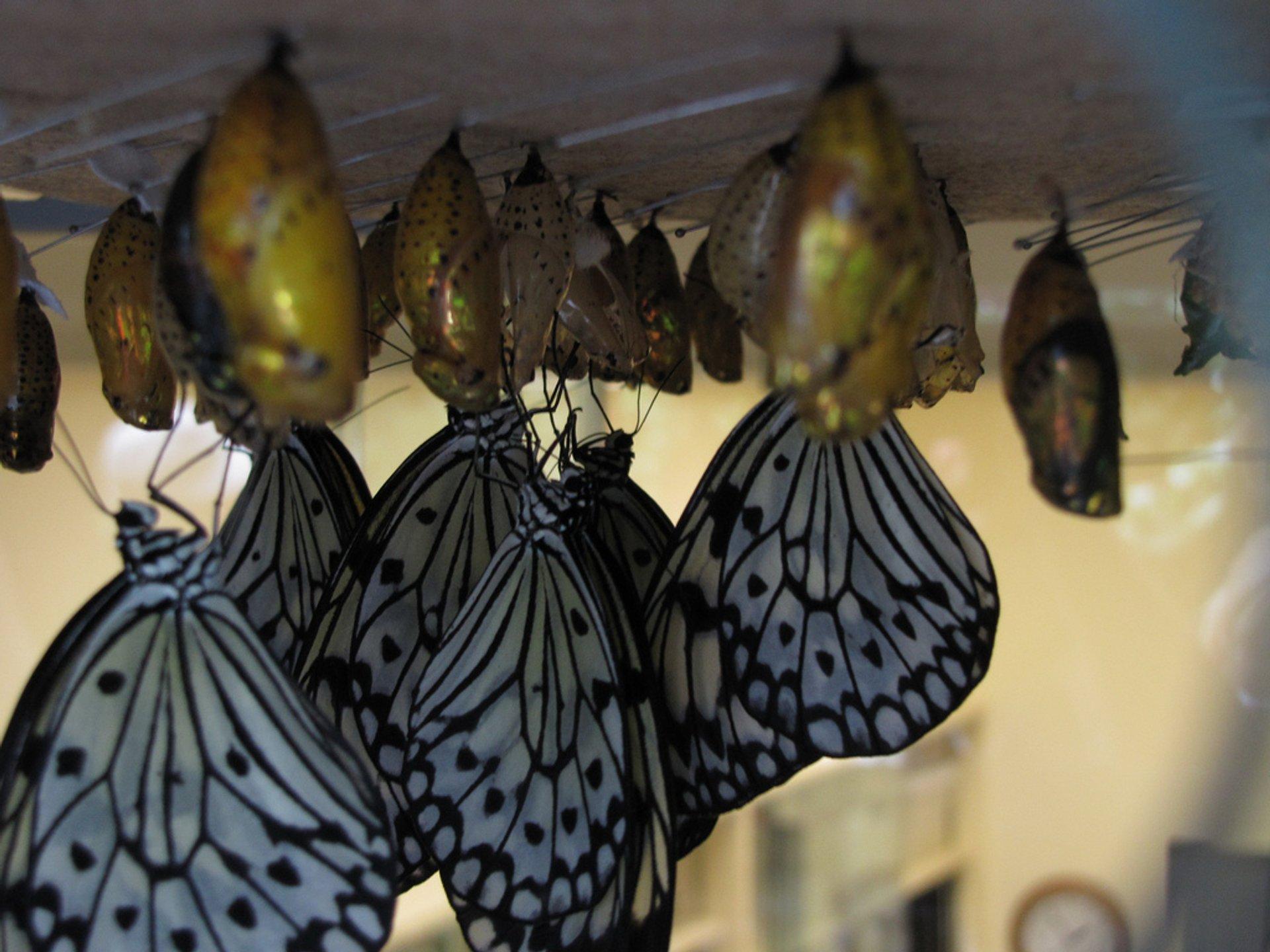 Butterfly Conservatory in Niagara Falls - Best Season 2020