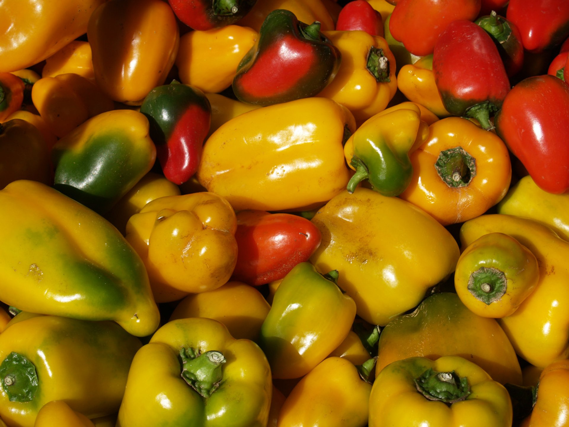 Capsicum in Australia - Best Season 2020