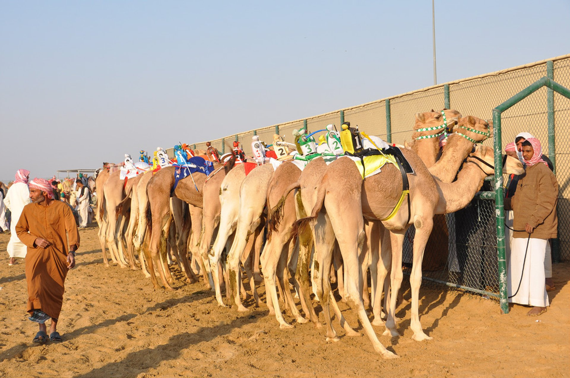 Best time to see Camel Racing Season in Dubai 2020