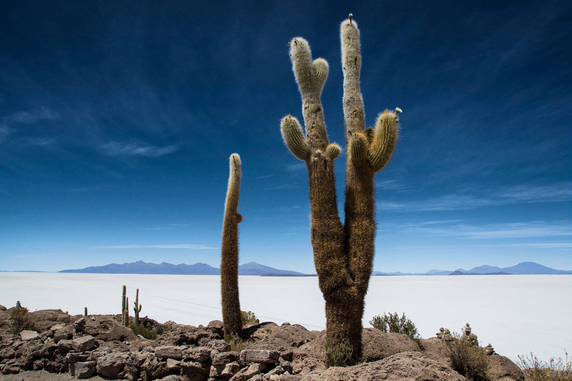 Incahuasi Cactus 2020