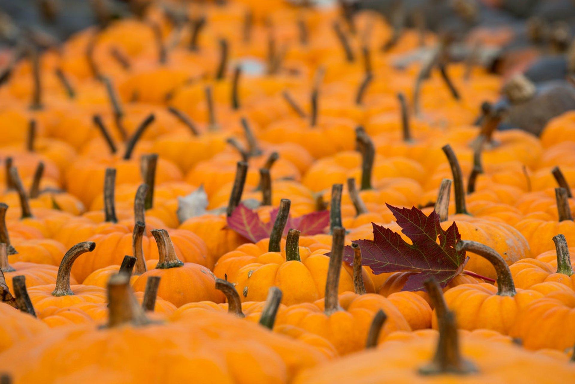 Ludwigsburg Pumpkin Festival in Germany 2019 - Best Time