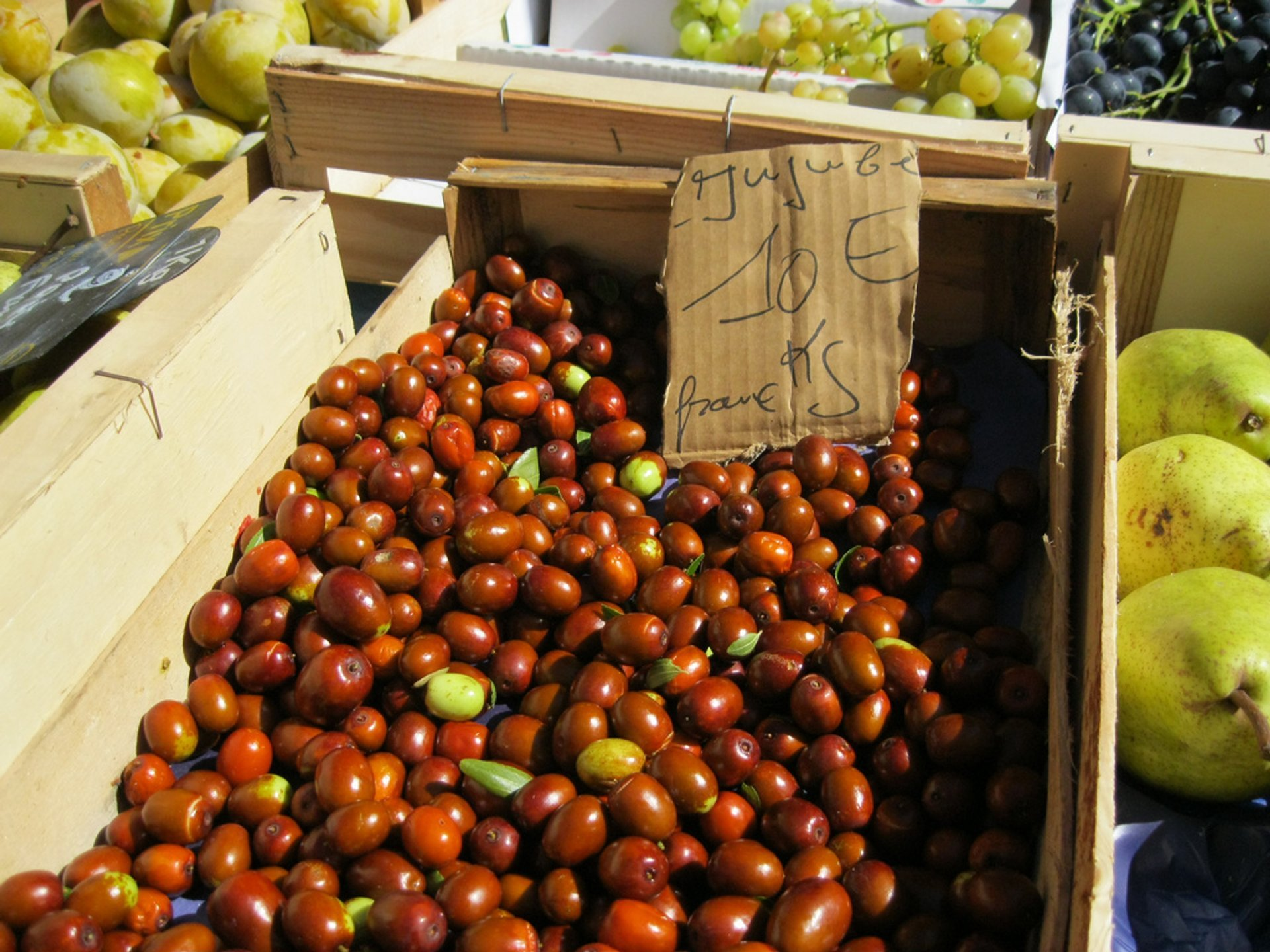 Jujube or Chinese Dates in Croatia 2020 - Best Time