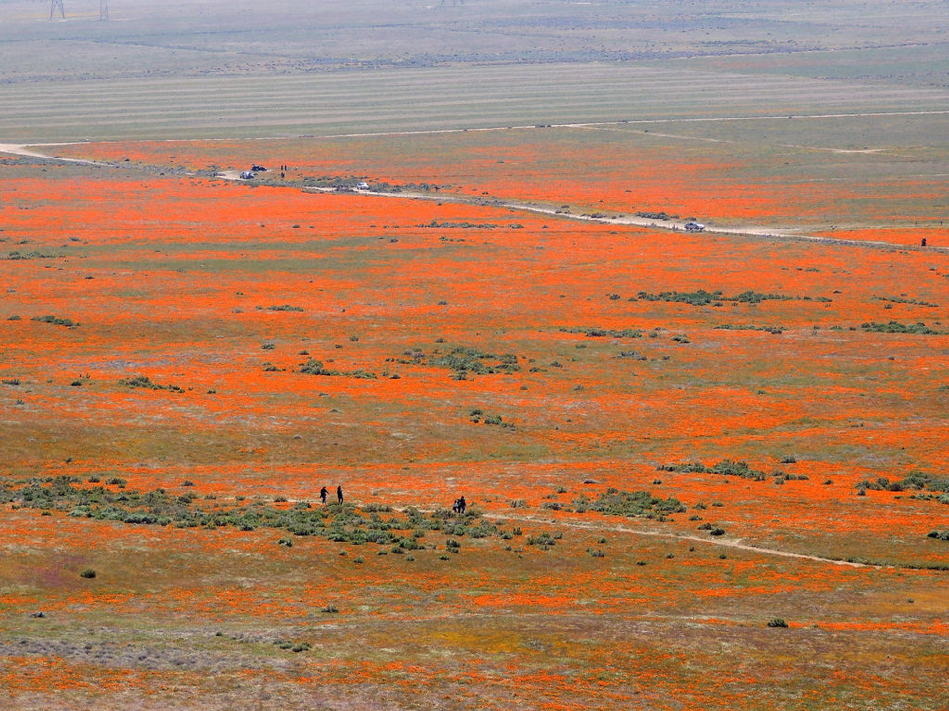 Antelope Valley California Poppy Reserve in California - Best Season 2019