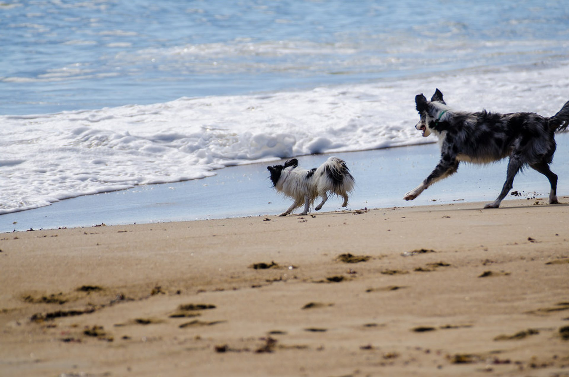 Dogs allowed on the beach from mid-October to mid-April 2020