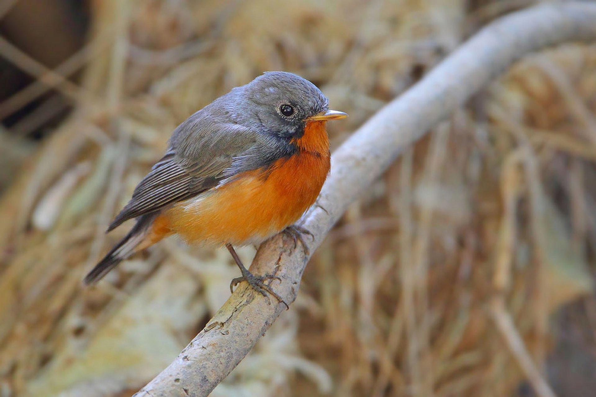 Birdwatching in Sri Lanka - Best Season