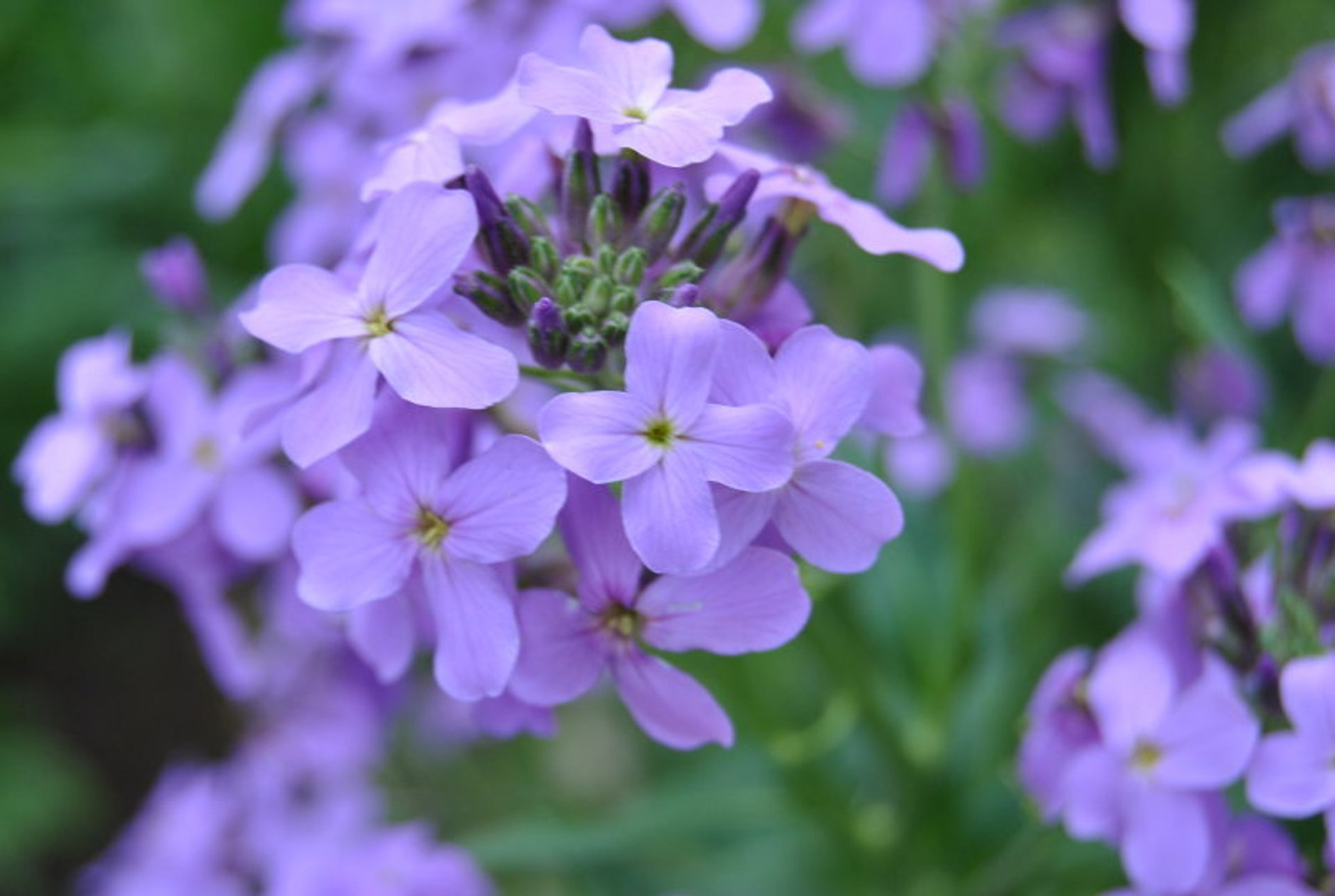 Flowers in Braxton County, West Virginia 2020
