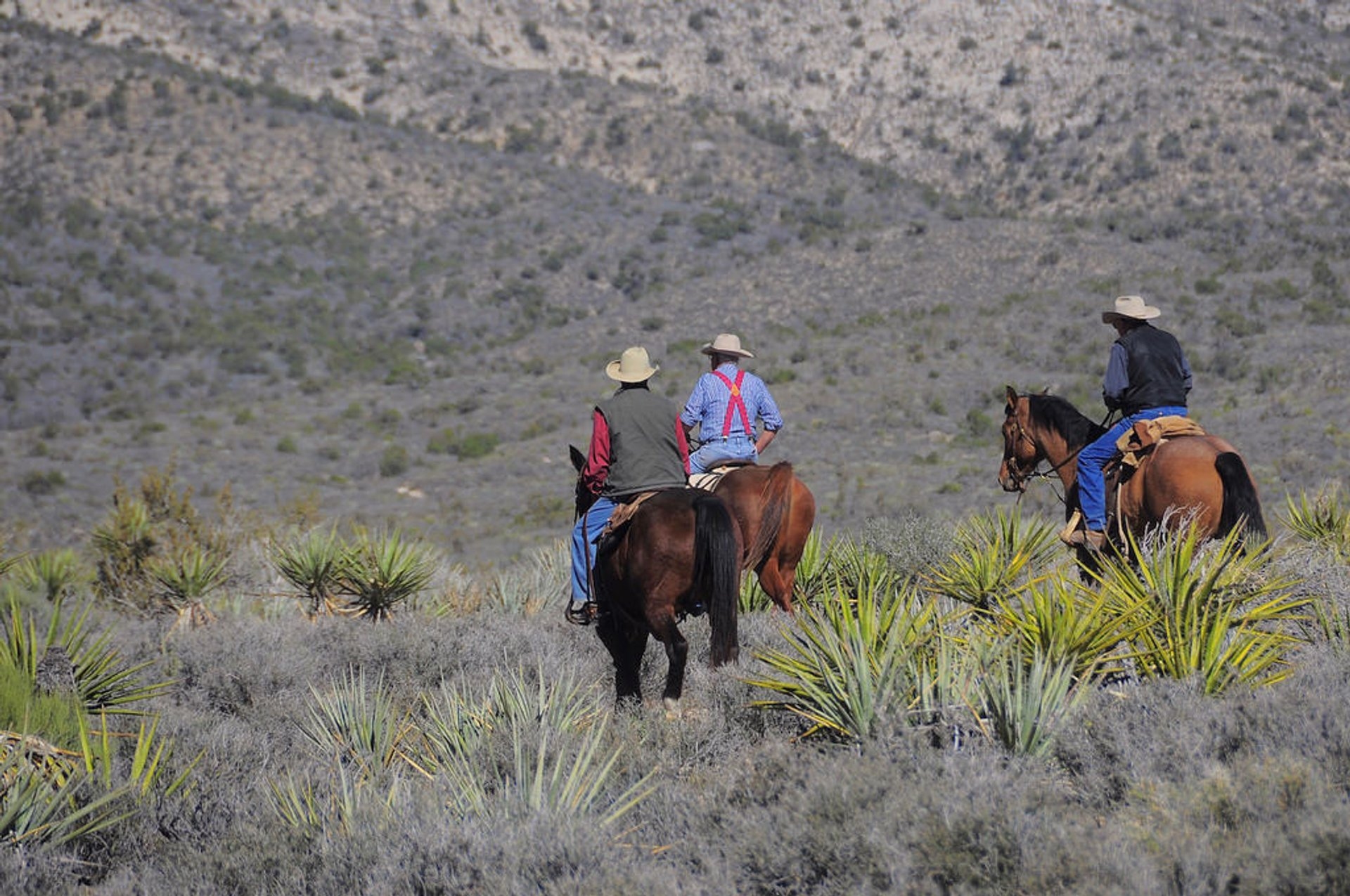 Best time for Horseback Riding through Red Rock Canyon in Nevada 2019