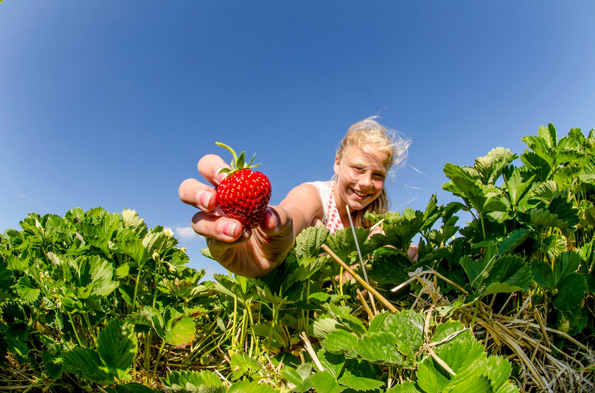 Best time for Strawberries in Norway 2020