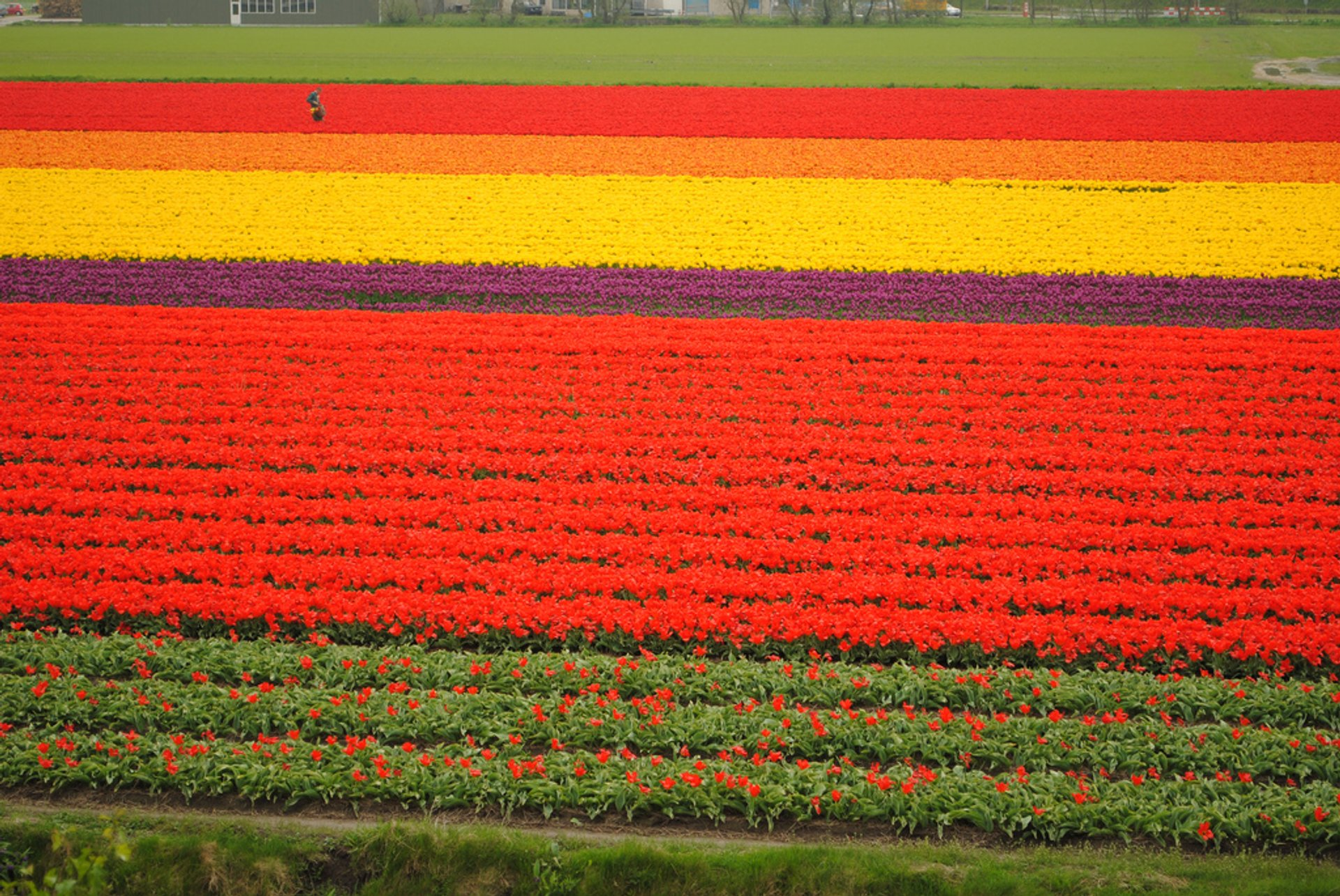Keukenhof (Garden of Europe) in The Netherlands 2020 - Best Time