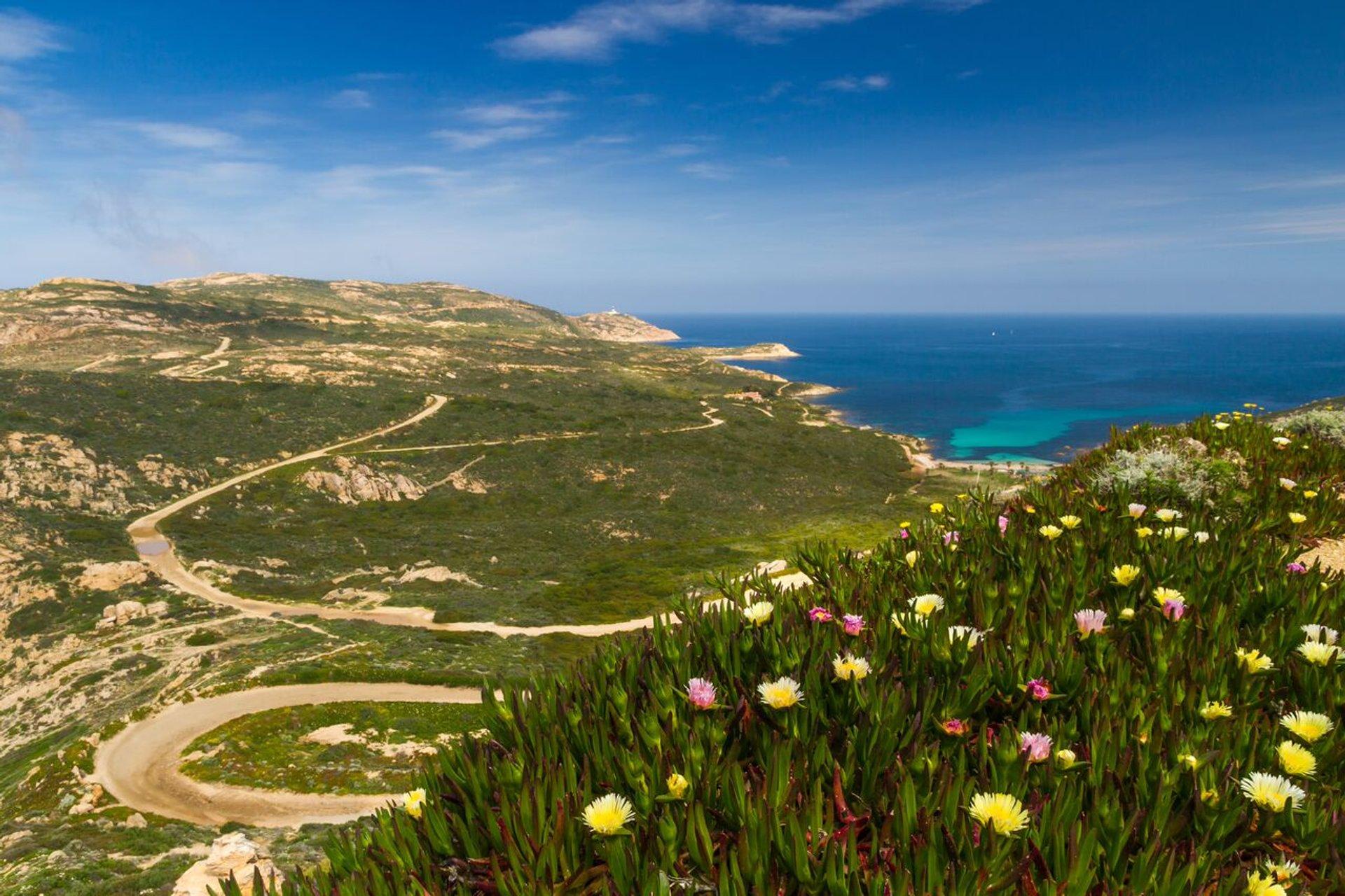 Wildflowers in Bloom in Corsica - Best Season 2020