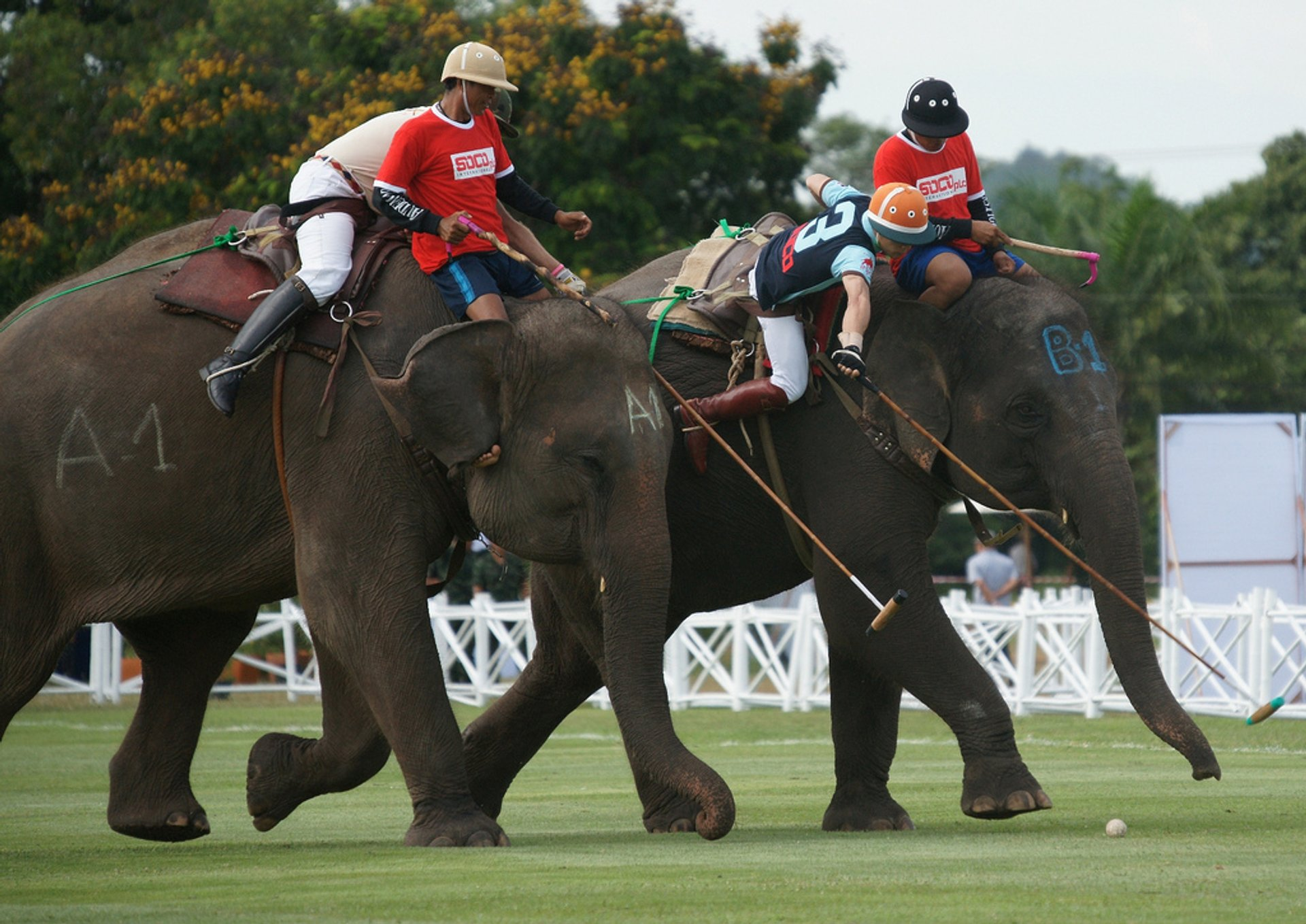 King's Cup Elephant Polo in Thailand 2019 - Best Time