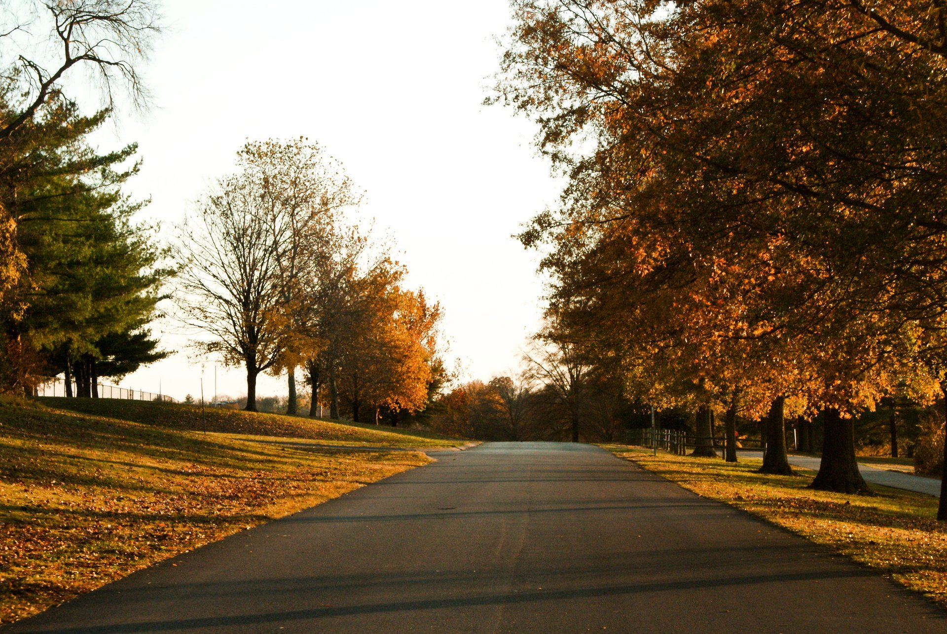 A fall path in Donelson, Nashville, TN 2020