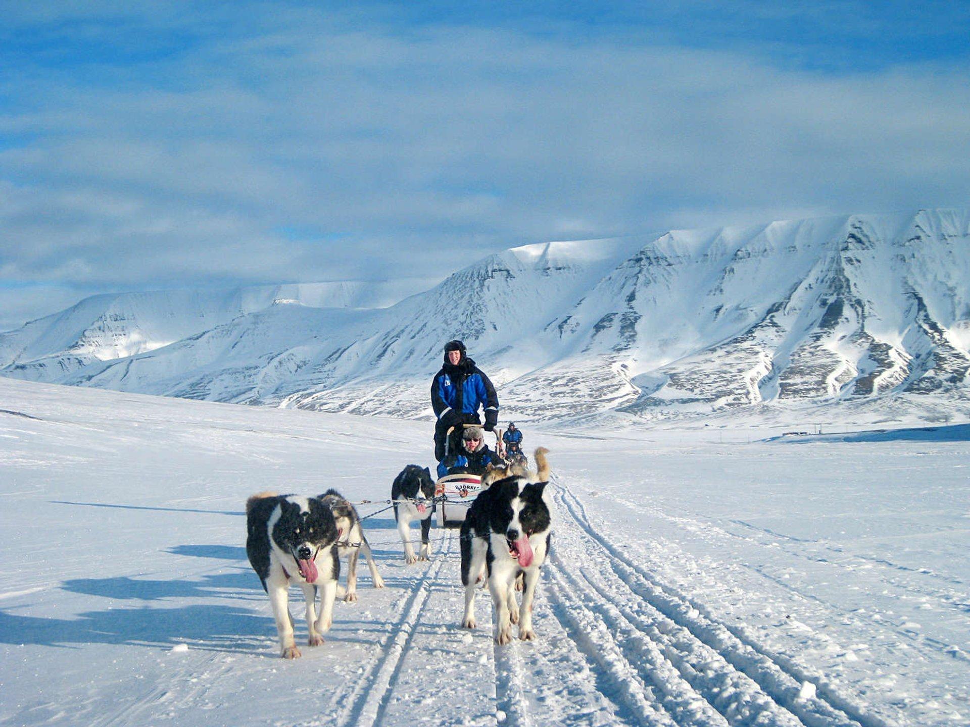 Dog Sledding in Svalbard 2020 - Best Time