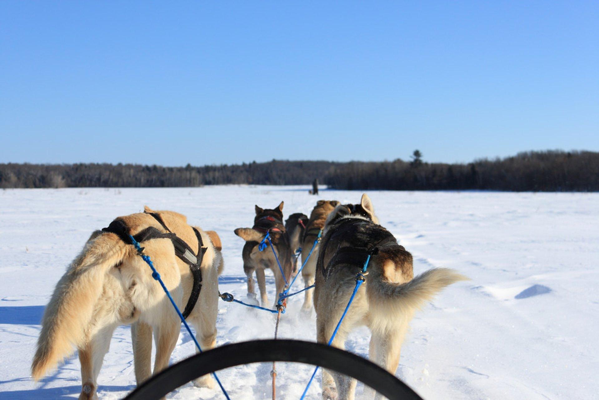 Dog Sledding in Quebec 2019 - Best Time