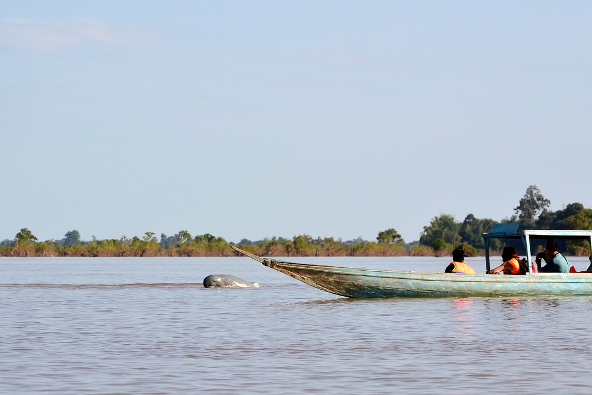 Mekong River Dolphin in Cambodia 2020 - Best Time