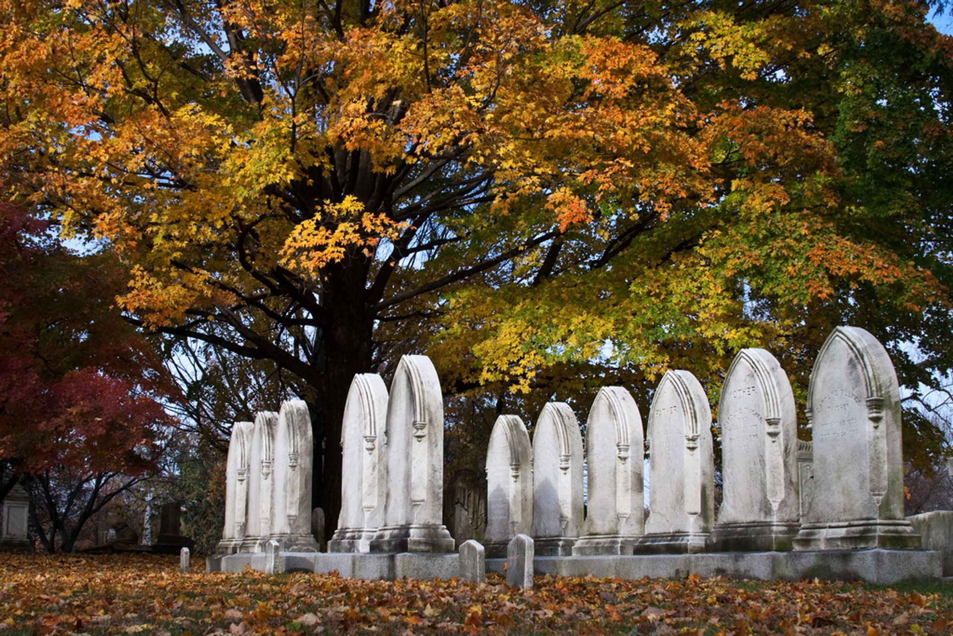 Mount Auburn Cemetery 2020