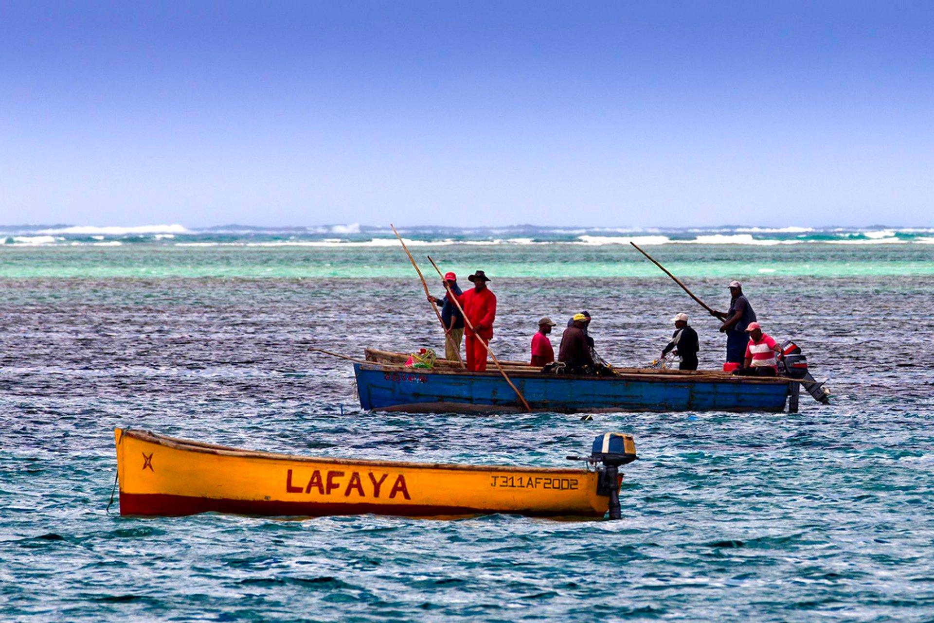 Deep-Sea Fishing Season in Mauritius 2019 - Best Time