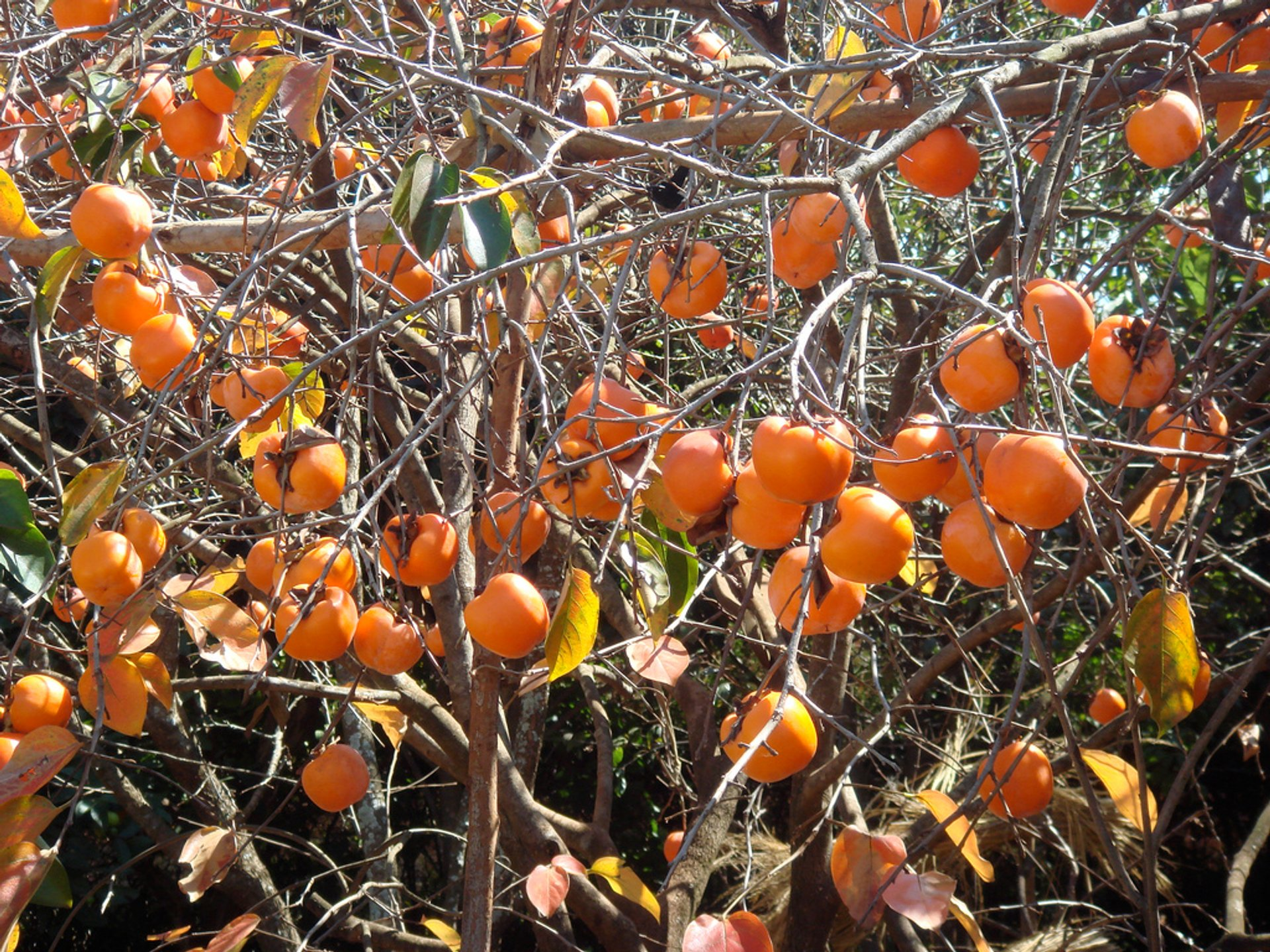 Exotic Fruits Season in Madagascar 2019 - Best Time