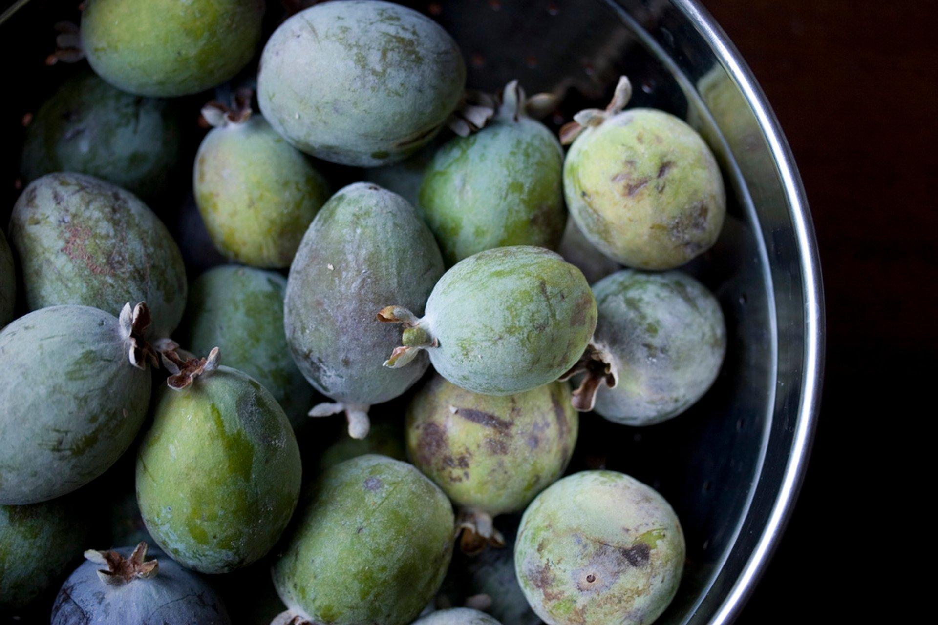 Guava or Goiaba in Rio de Janeiro 2020 - Best Time