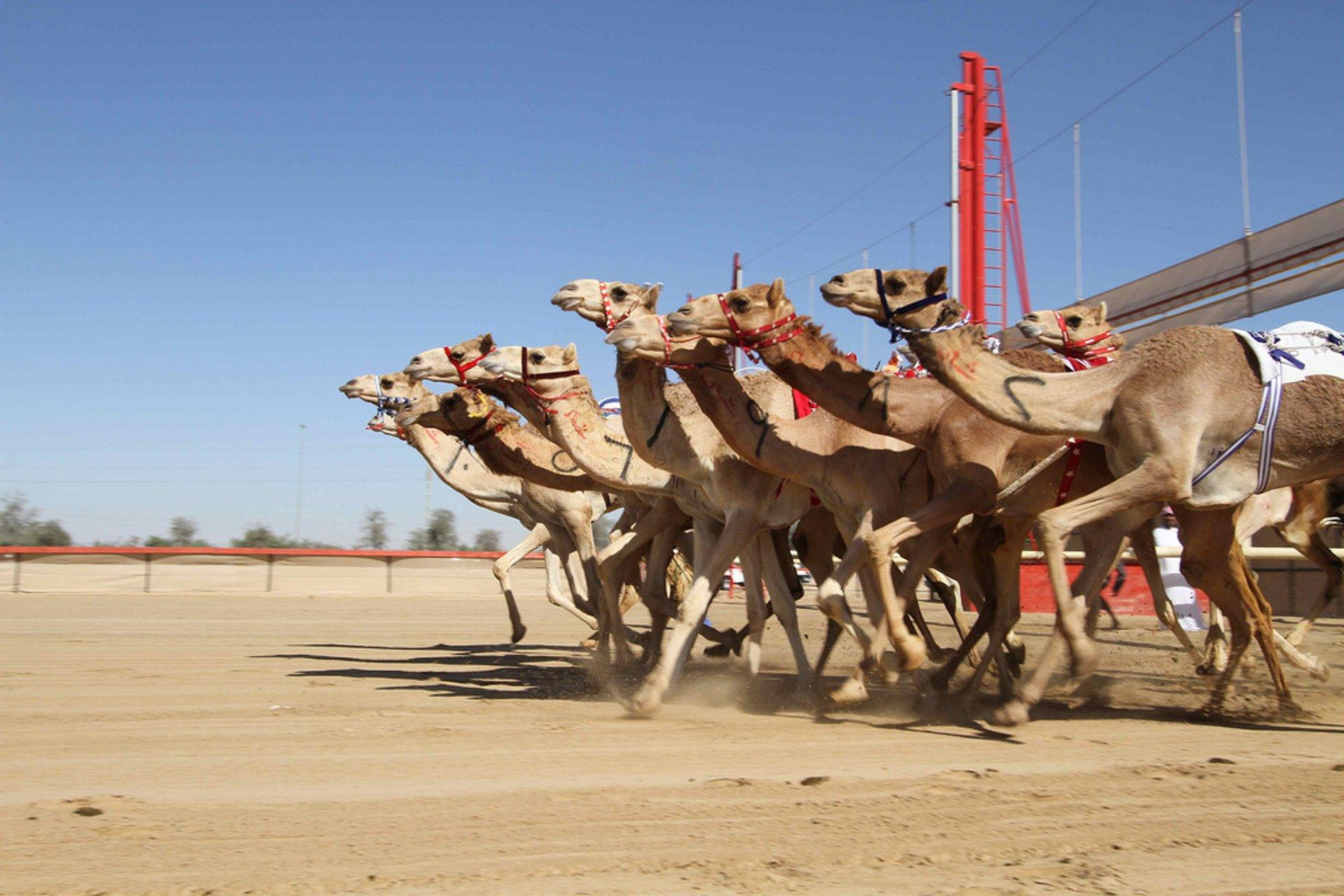 Al Marmoom Heritage Festival in Dubai 2020 - Best Time