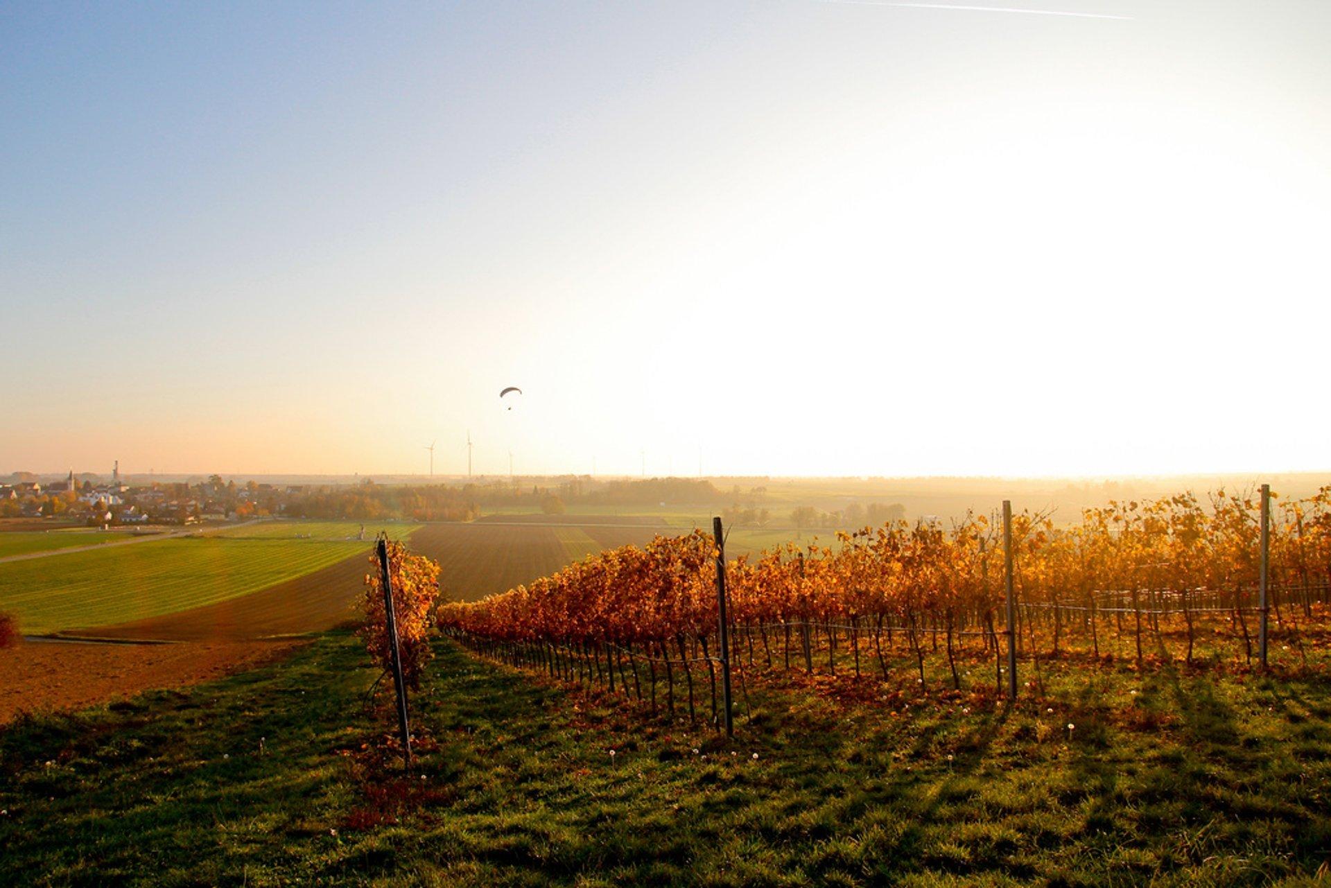 Lower Austria Grape Harvest in Austria 2020 - Best Time