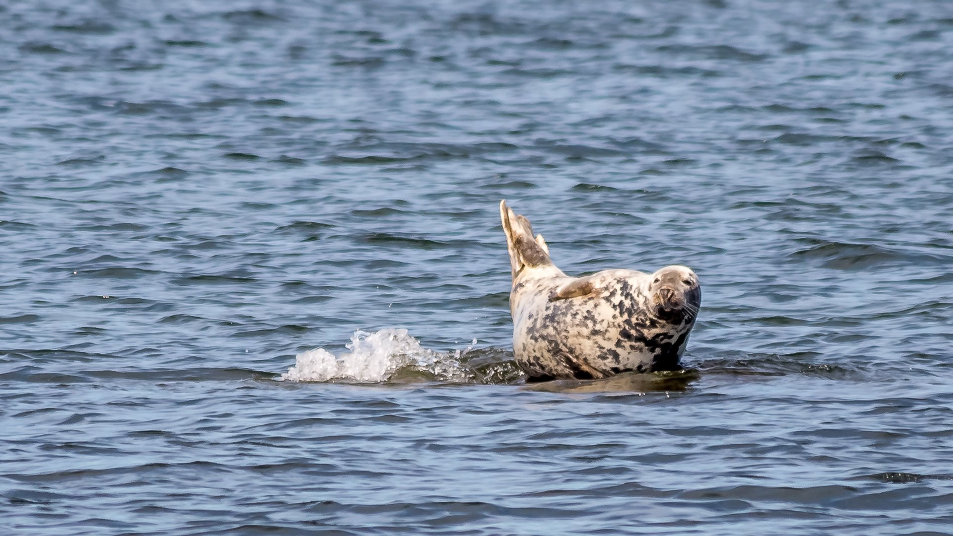 Seal Watching in Estonia - Best Season 2019