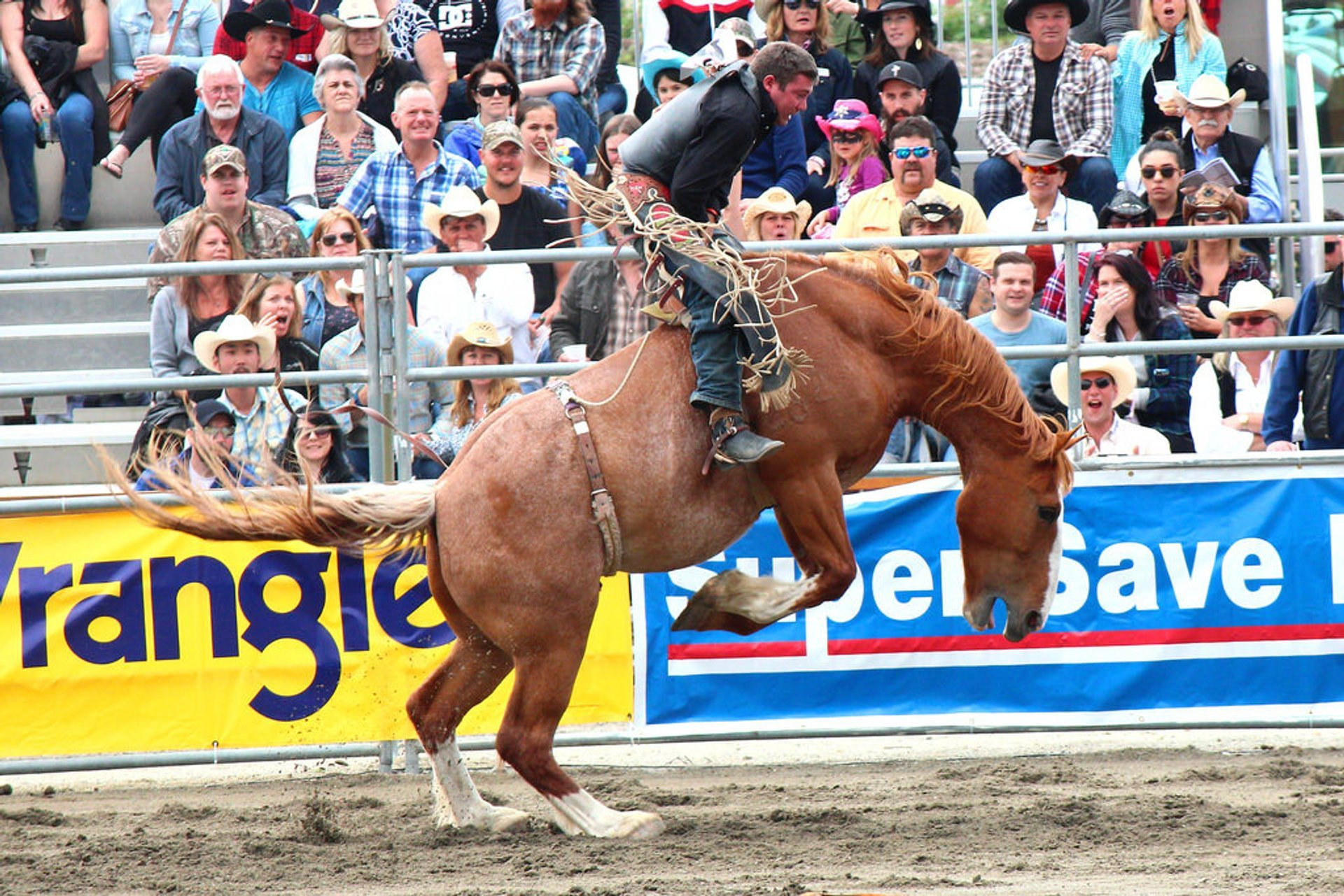 Cloverdale Rodeo and Country Fair in Vancouver - Best Season 2019
