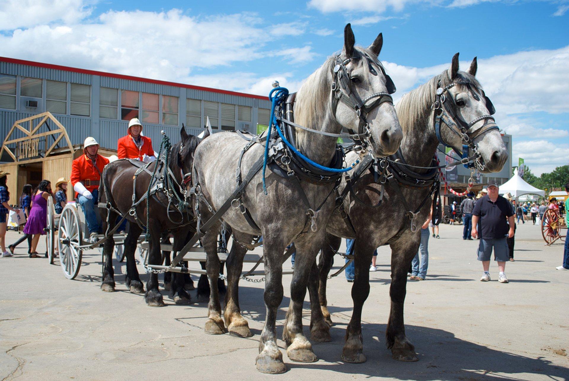 Calgary Stampede in Calgary - Best Season 2020