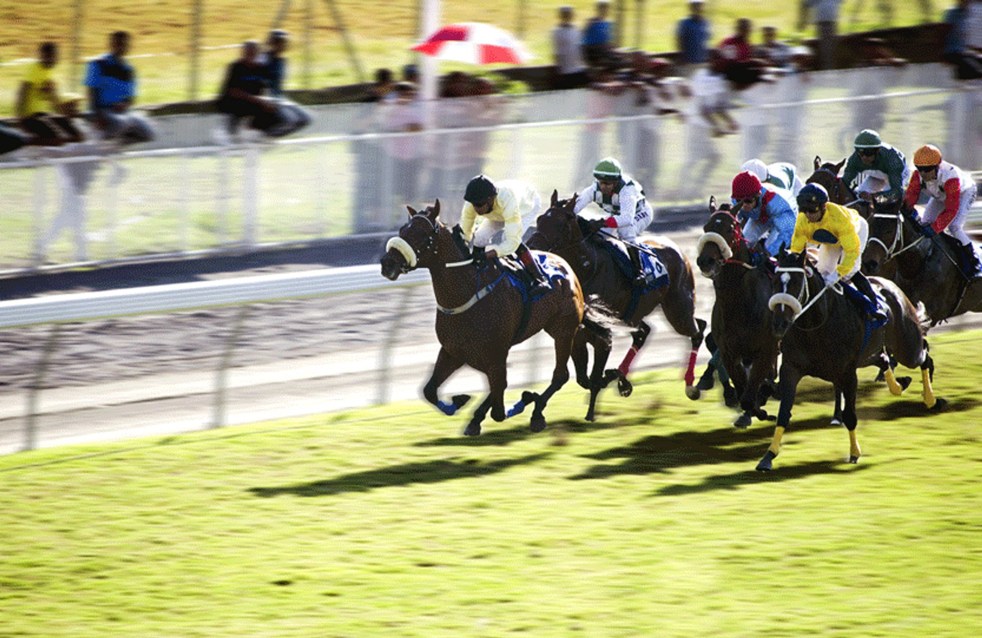 Horse Racing in Mauritius - Best Season 2020