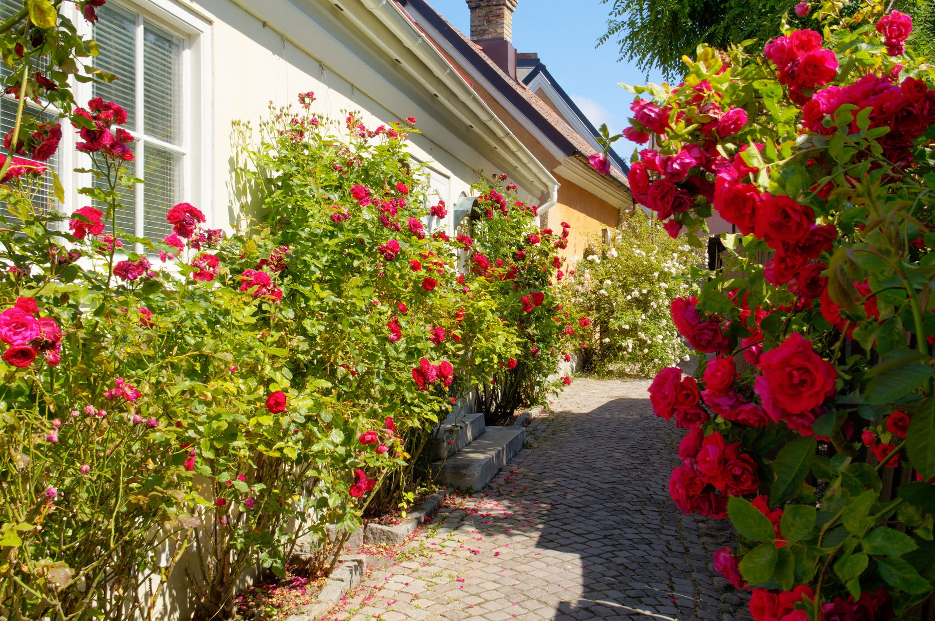 The Island of Roses in Sweden - Best Season
