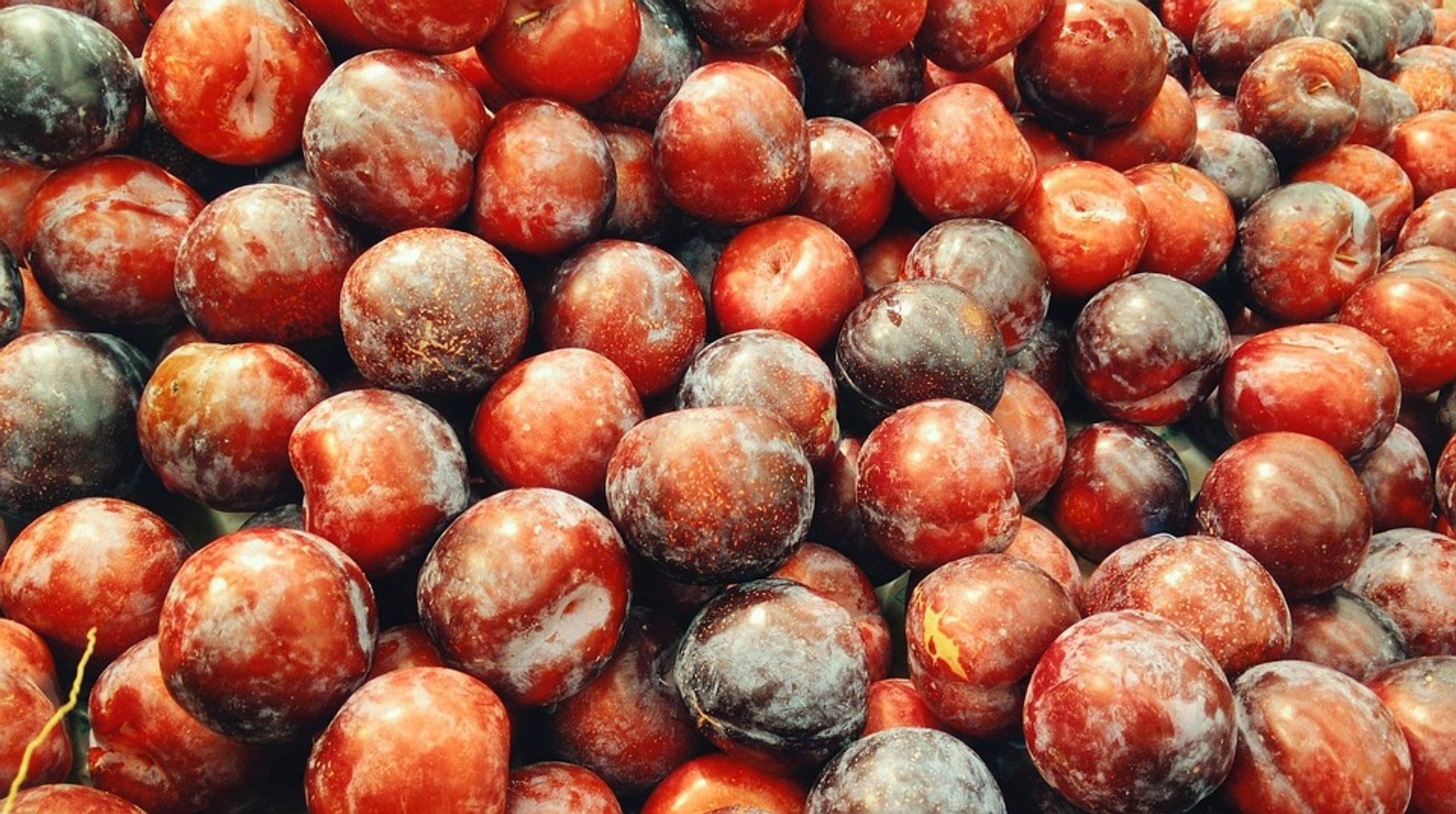 Plums—the main ingredient of Tkemali sauce 2020