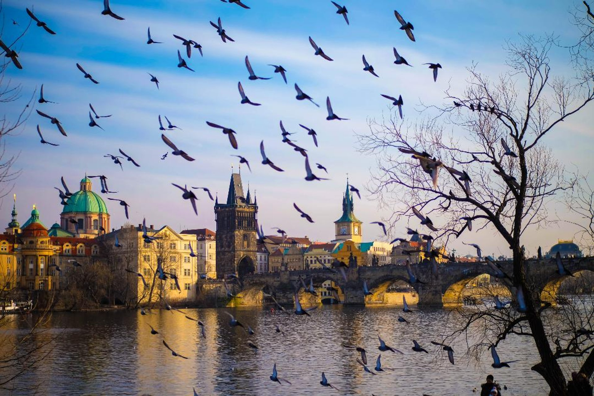 Birdwatching in Czech Republic - Best Season 2019