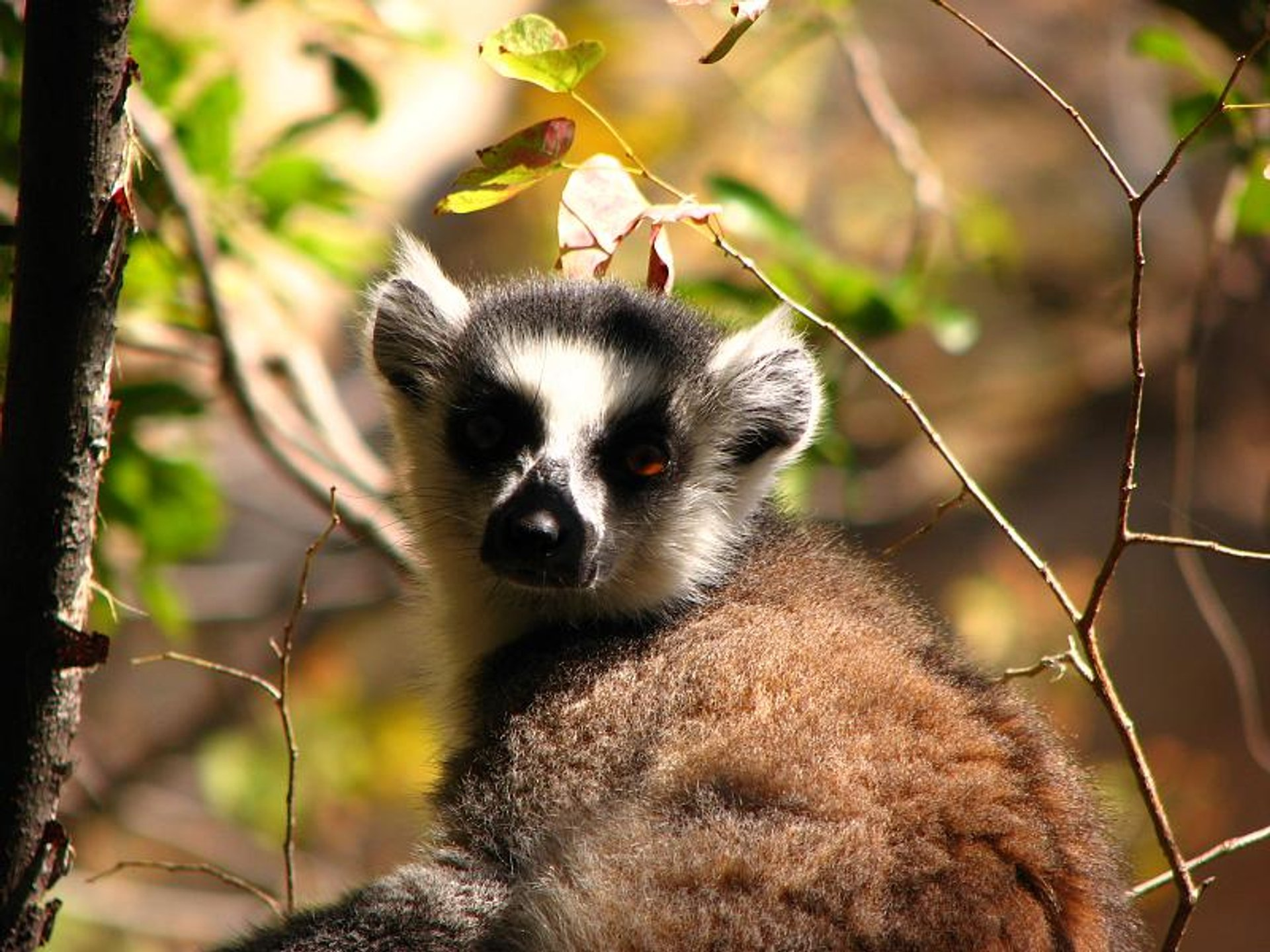 Jurassic​ Park with Lemurs in Madagascar 2020 - Best Time