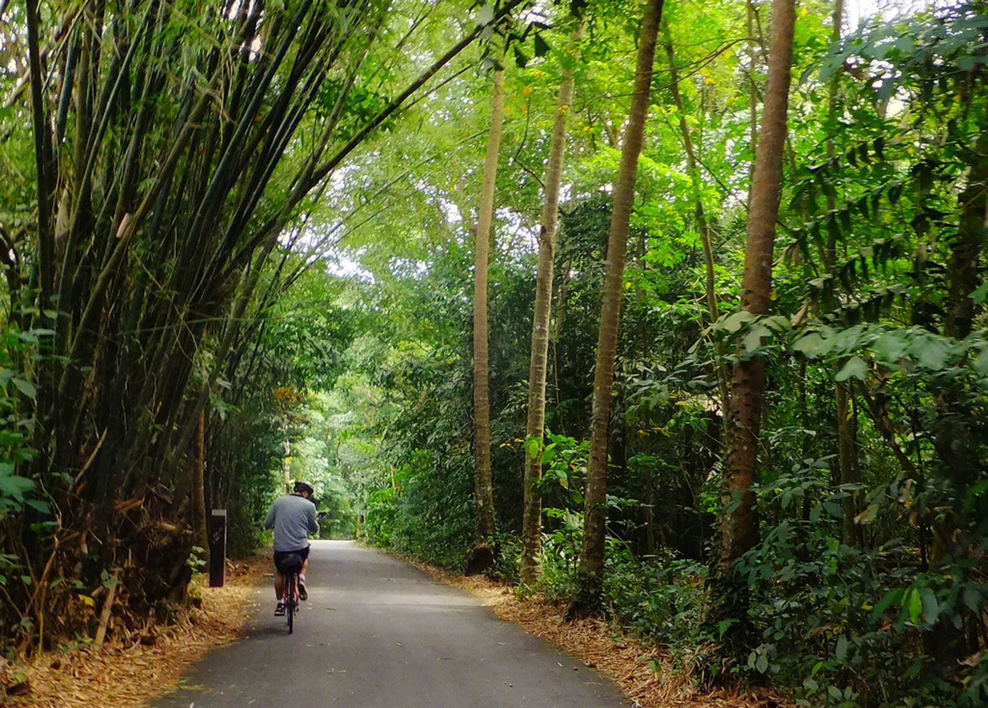 Ride Bikes on Pulau Ubin in Singapore 2019 - Best Time